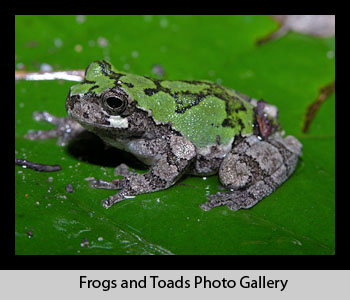 Frog and Toad Images
